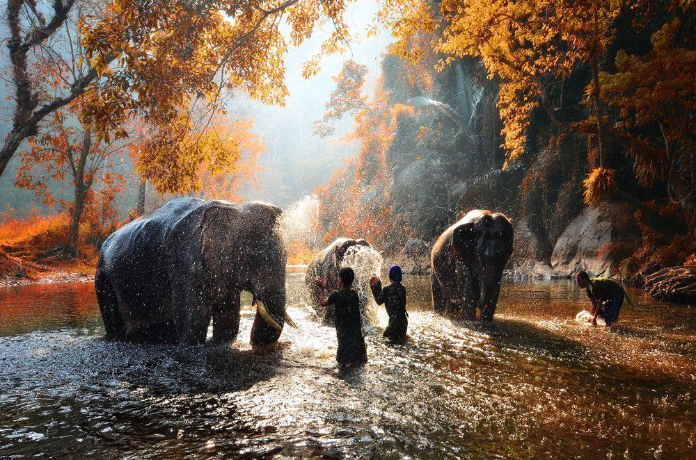 My Thailand Elephant Park Visit