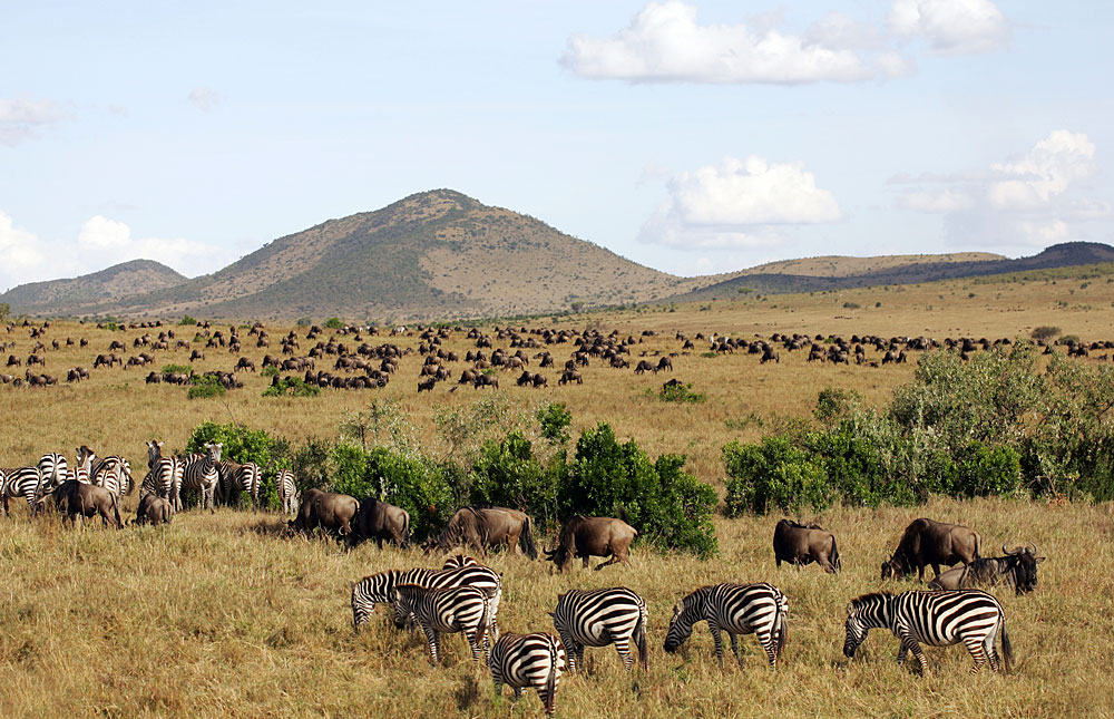 Masai_Mara_National_Reserve