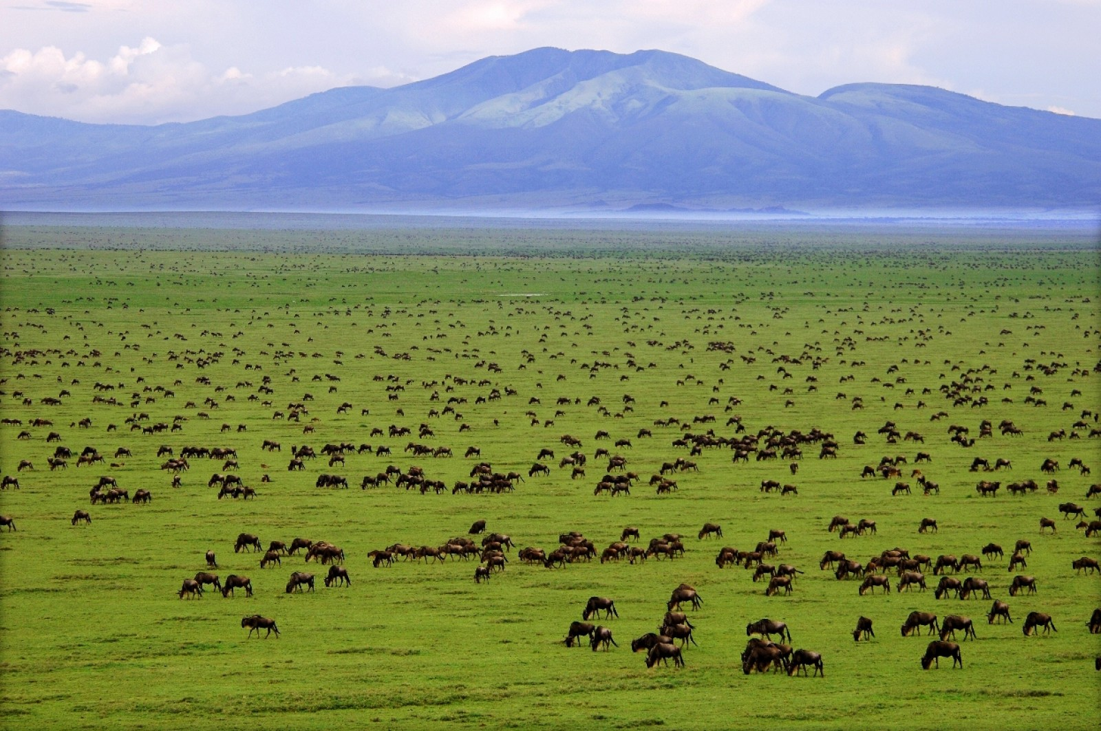 Discover The Animals Of The Serengeti